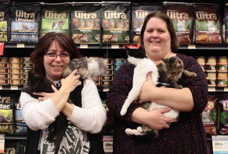 I Am Alive Cat Rescue Fundraiser