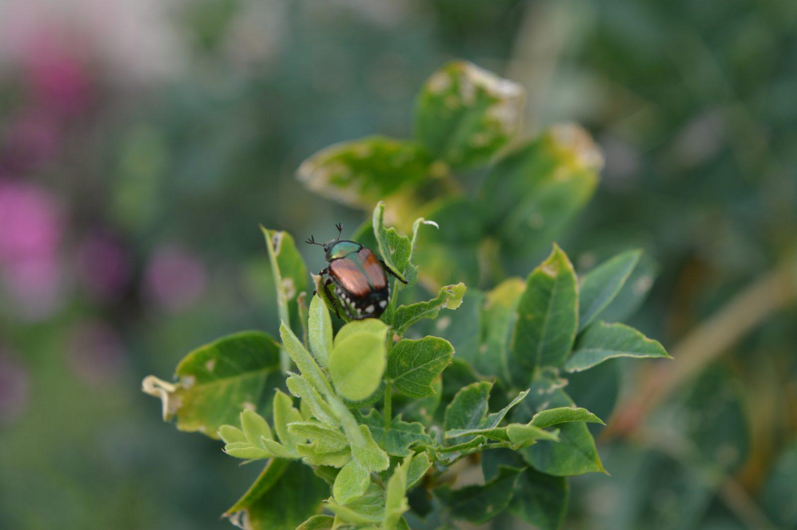 Preventing Pesky Garden Pests