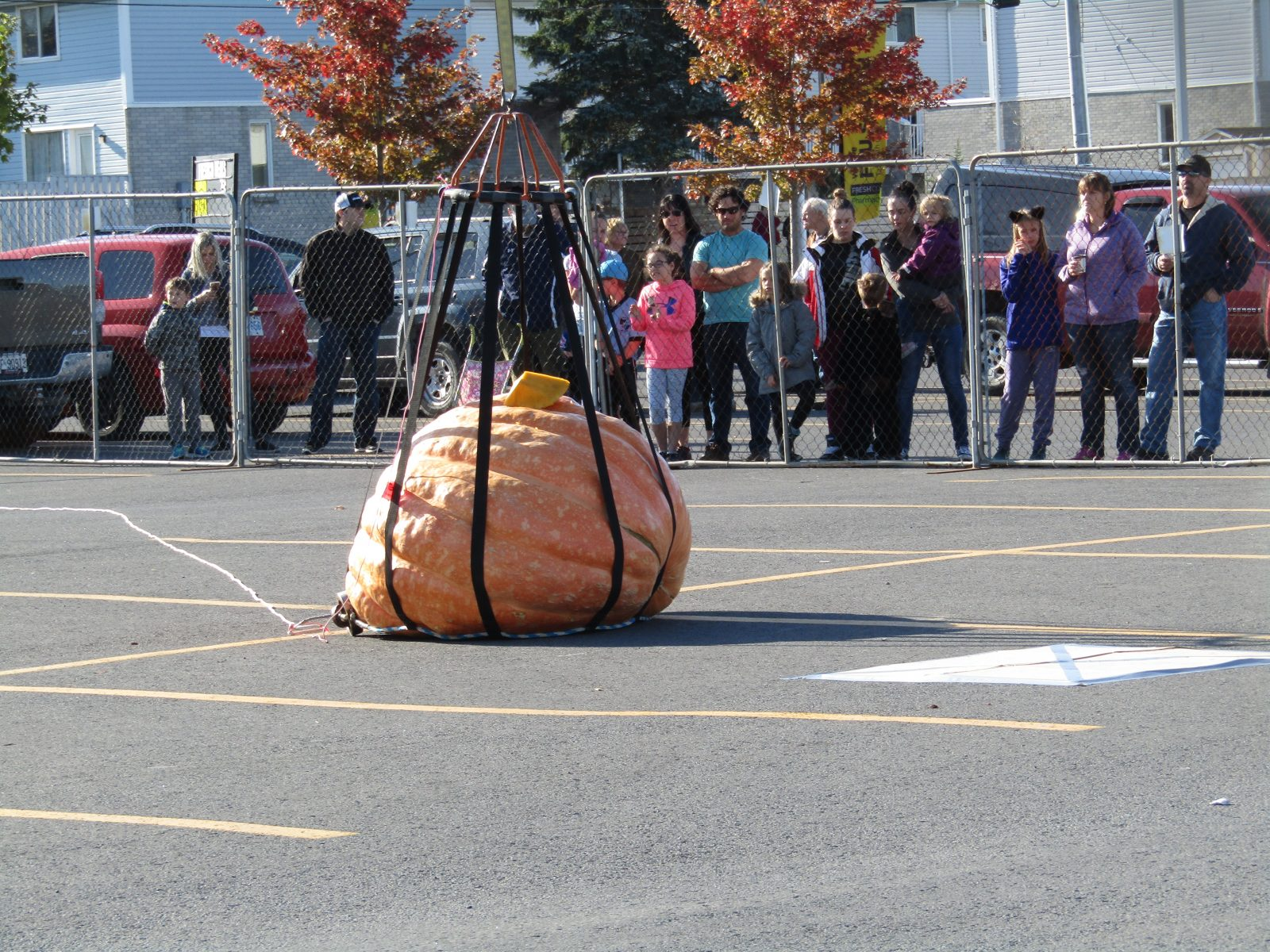 Festive fun at Pumpkin Drop