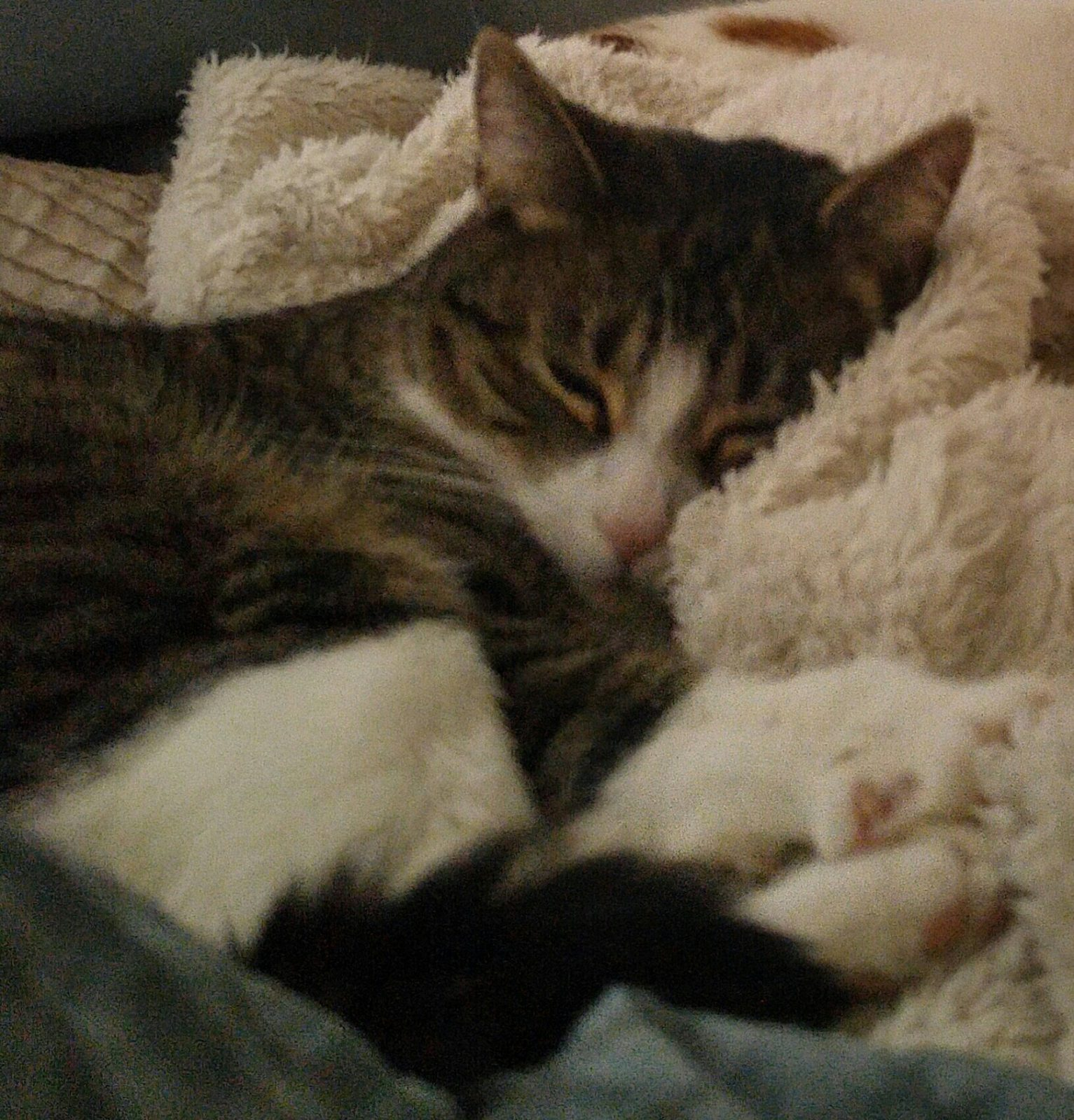 LETTER TO THE EDITOR: No euthanasia for roaming cats!