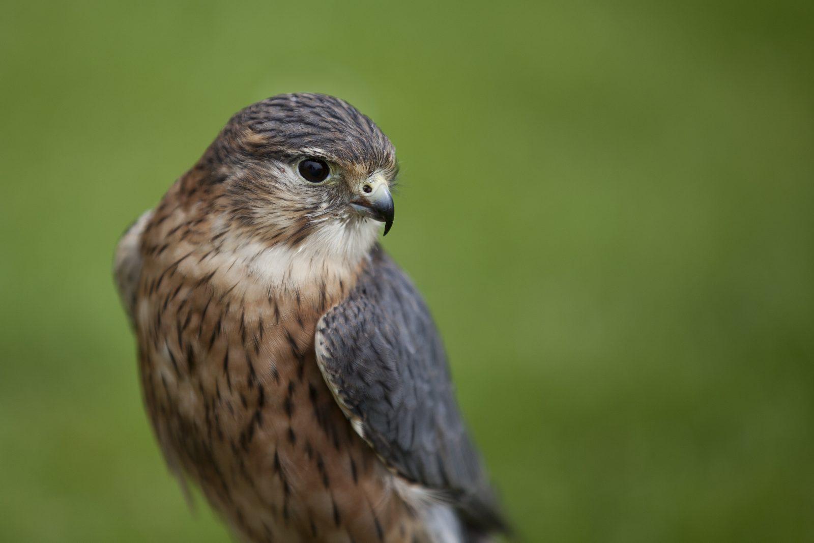 Following the falcon