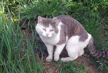 Animal rescue receives grant to de-sex feral cats
