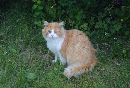 """OSPCA: Cornwall's homeless cats """"crisis situation"""""""