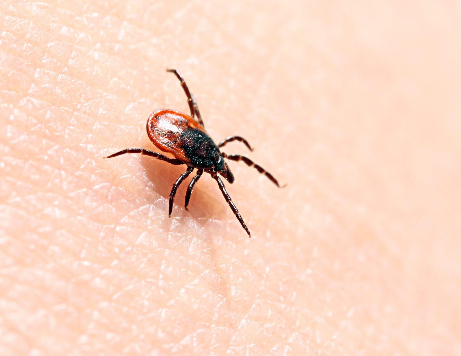 Cornwall, SDG endemic area for black legged ticks