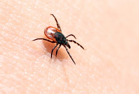 Councillor worries city could be liable for Lyme disease