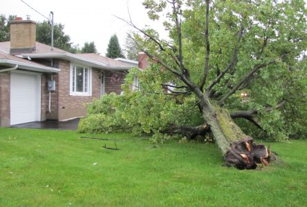 UPDATE: Storm batters Cornwall area, trees snapped