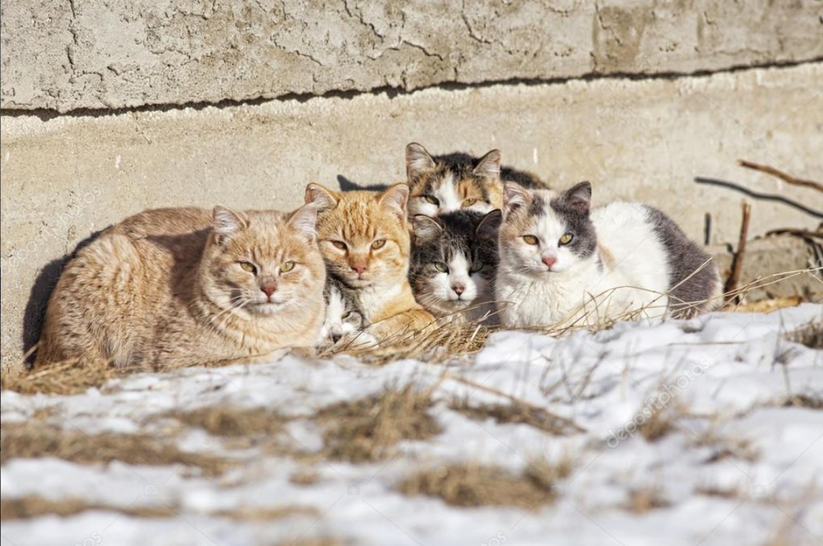 OSPCA seasonal programs assist feral cats