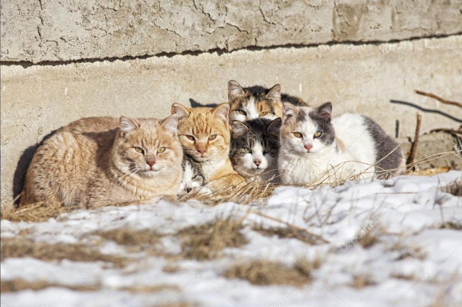 City launches Cat Consultation Survey