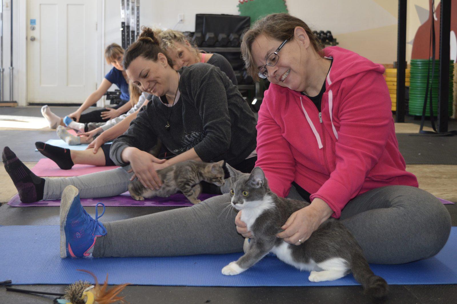 Feline good at Kitten Yoga