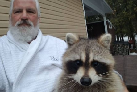 Ron the Raccoon Whisperer