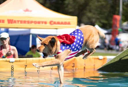 Canine competitors congregate at Maxville's K9 Sport Fest