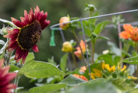 Food and flowers grow at Backyard Food Day