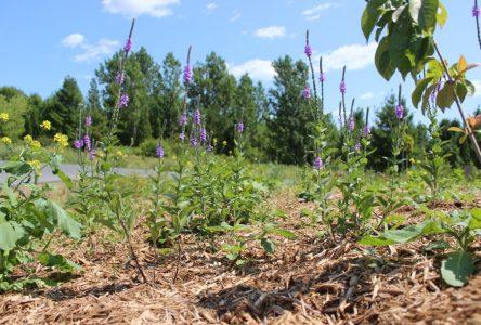 OPG butterfly garden signifies new ventures
