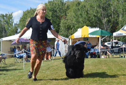 'Pawsitive' turnout at Cornwall District Kennel Club Dog Show