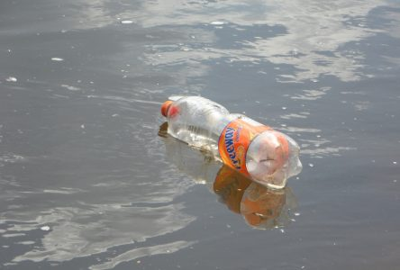 Science on Tap tackles plastics