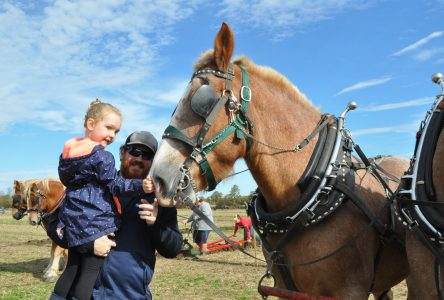 54 take part in this year's Stormont Plowing Match