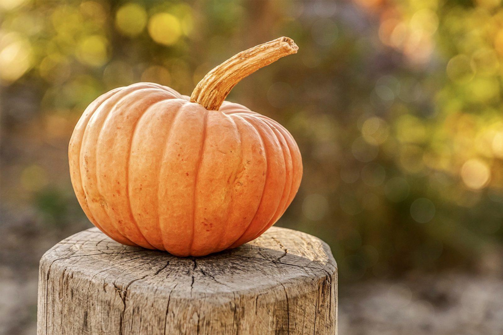 EOHU offers safe Halloween alternatives