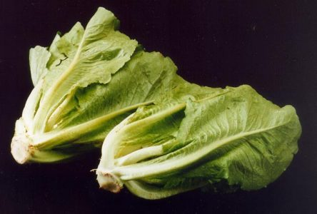 Canadians cautioned amidst U.S. romaine lettuce recall
