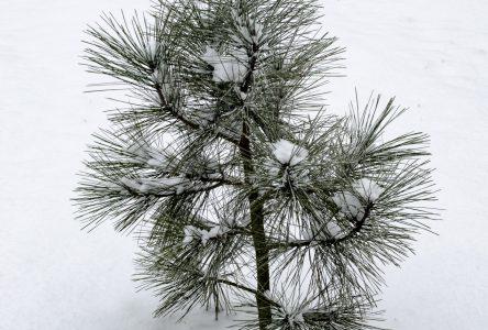 L'Office de protection de la nature offre des subventions pour la plantation d'arbres jusqu'en mars