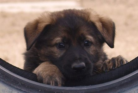 Cornwall boy names RCMP puppy