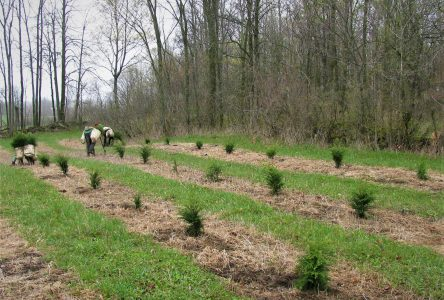 RRCA Accepting Tree Seedling Orders for Spring 2021