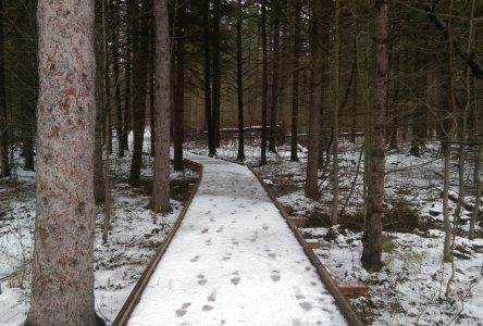 Some South Nation trails remain open for winter