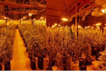 OPP seize 5K cannabis plants in South Glengarry