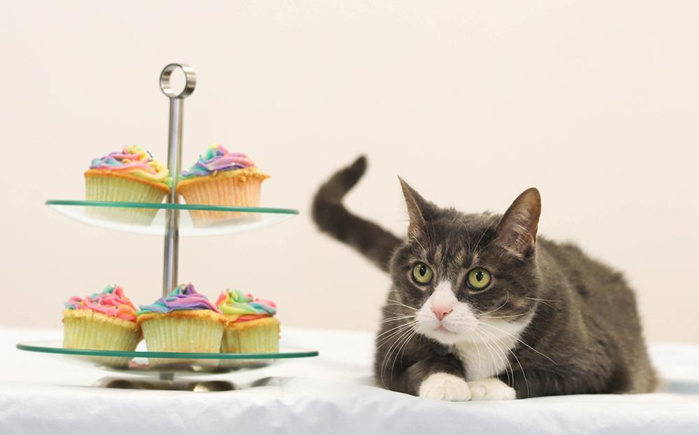 OSPCA celebrates National Cupcake Day