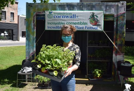 Incredible Edible plant give-away hands out over 2.5K plants