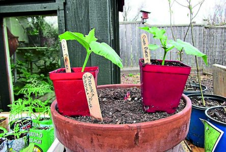 Incredible Edibles engage local gardeners