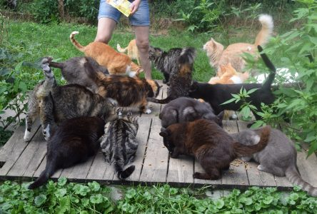 A safe haven for abandoned cats