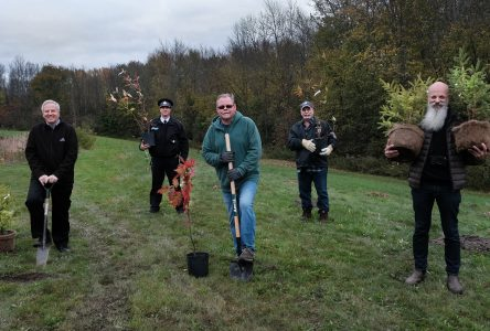 RRCA Partners with South Stormont to Plant 300 Trees at Municipal Office Grounds